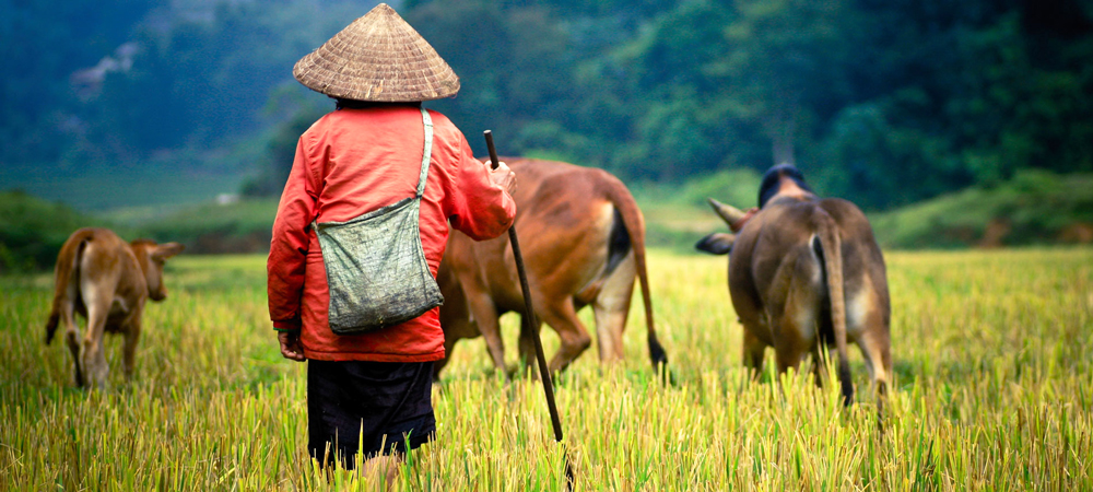 Vietnam Adventure Journey